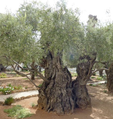 garden-of-gethsemane-844675-wallpaper